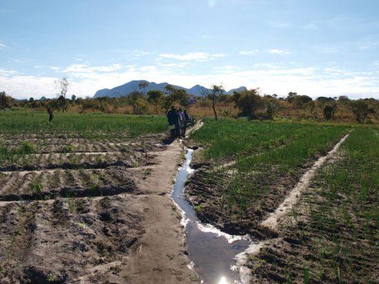 伝統的な慣行農業