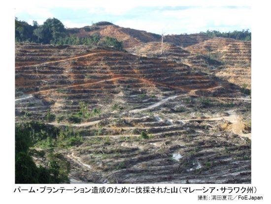 プランテーション伐採