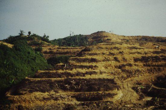 油やしの植林のために破壊された熱帯林