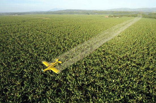 大規模プランテーション農業