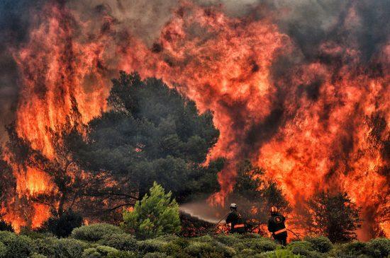 猛暑が引き起こす「森林火災」。...