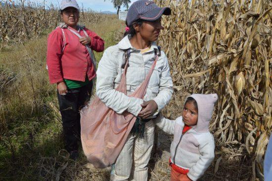 コーン収穫の母子