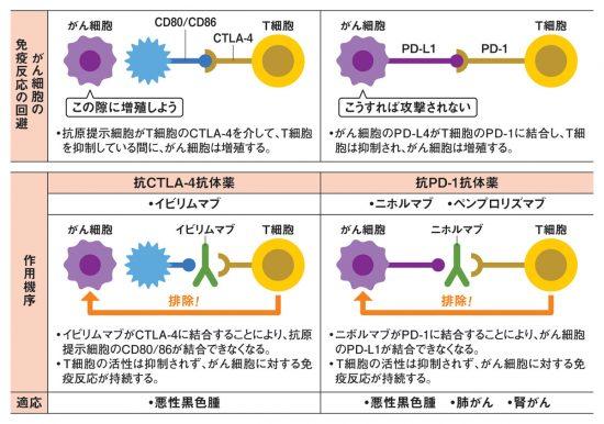 がん免疫治療薬の作用機序