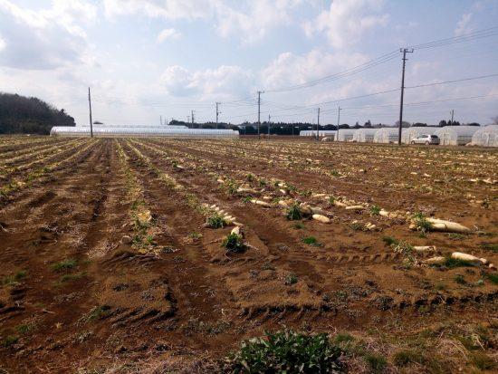 鹿島灘にある実習先農家の畑