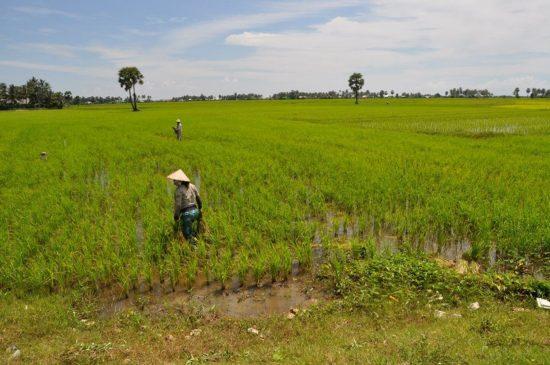 ベトナム南部の農村