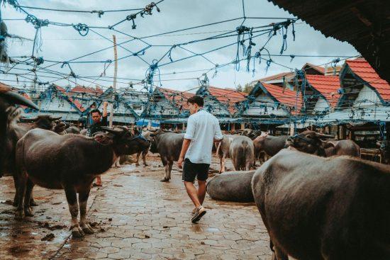 水牛市場に訪れた筆者