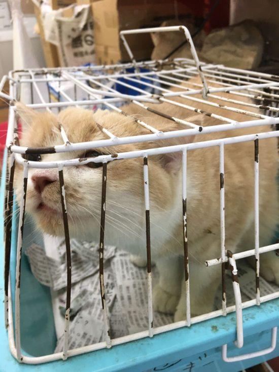 ペット ショップ 売れ残り 猫販売
