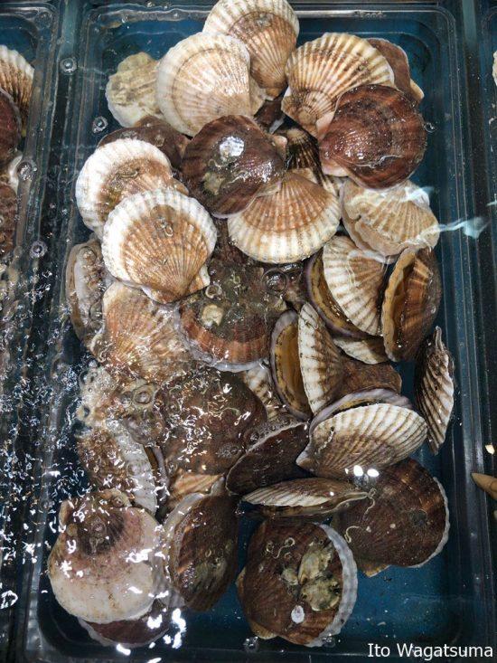 実際に触れることができる貝類