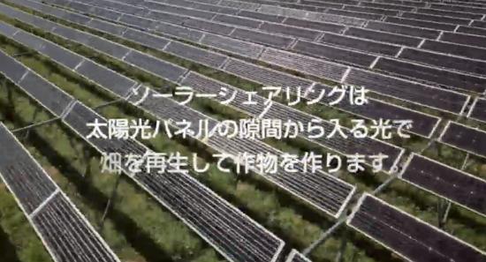 隙間をあけて太陽光パネルを農地に設置するソーラーシェアリング