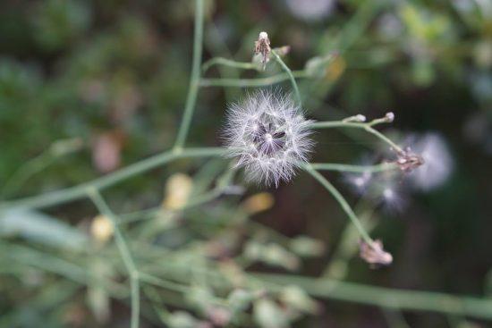 植物イメージ2