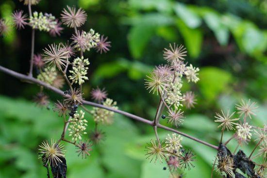 植物イメージ1